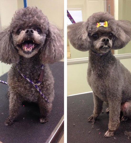 Dog Grooming Indianapolis IN